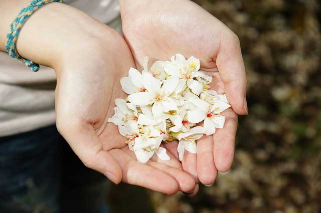 Hands offering flowers - Simple Gift Giving