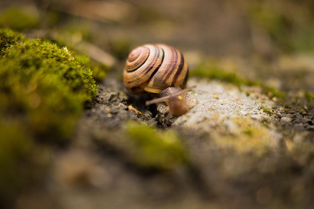 Snail - Slowly and patiently - Simple living resources