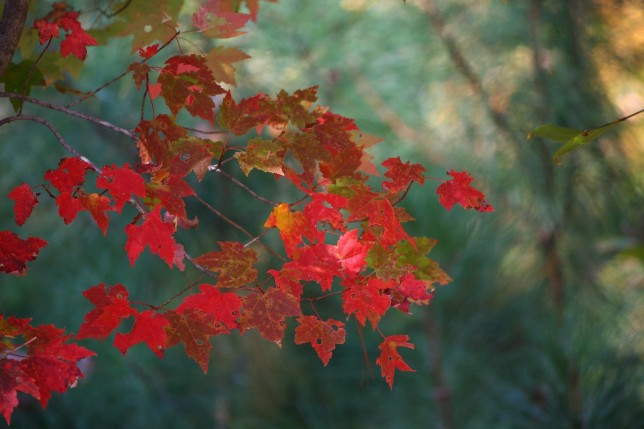 Maple Leaves - stop cushioning your home with fear