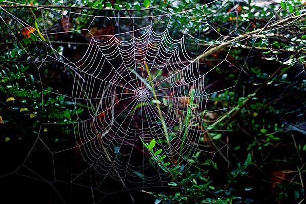 spider web - spiders