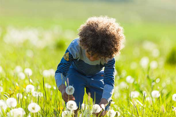 Boy Picking Dandelions - Unschooling and Self Worth
